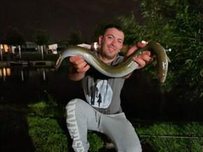 eel (1).jpg