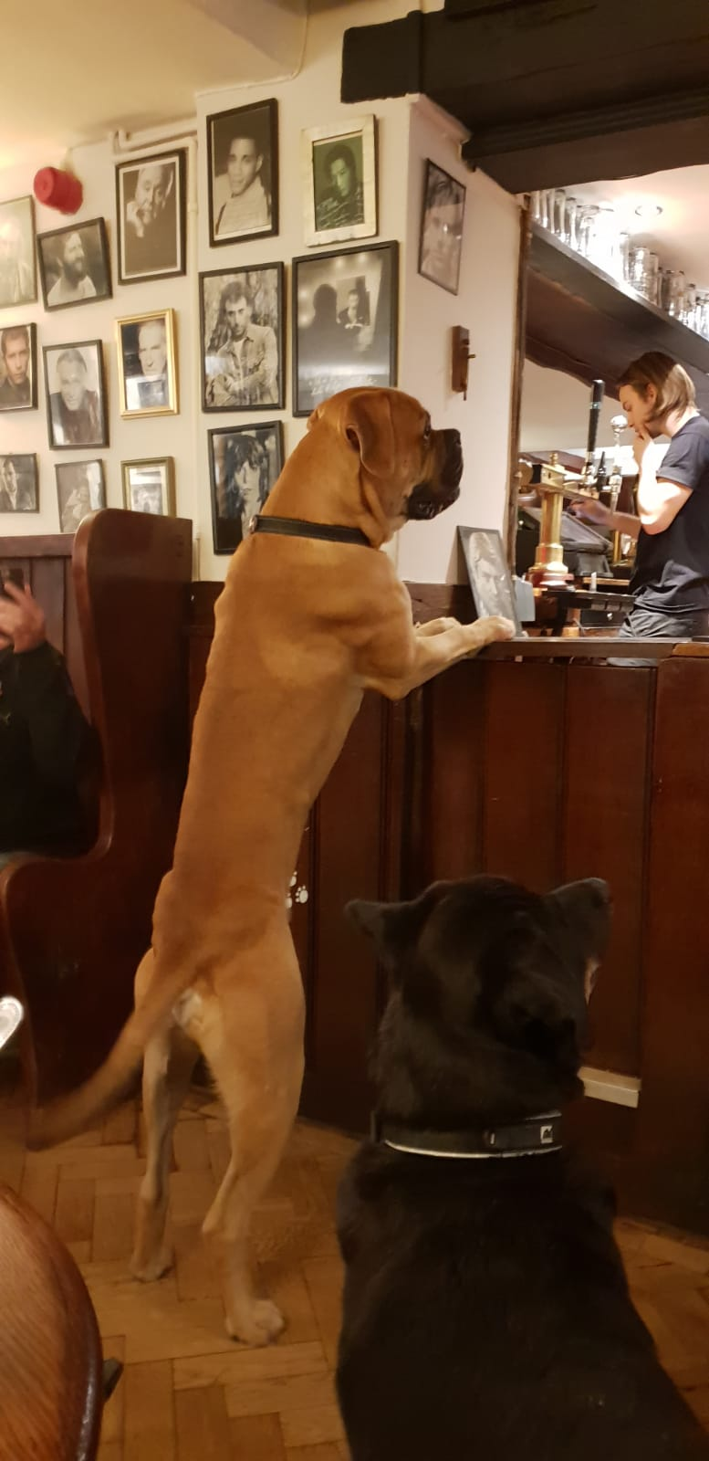 The Crown at Tiddington is VERY dog friendly!