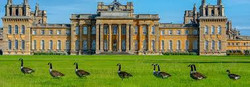 Blenheim Palace.jpeg