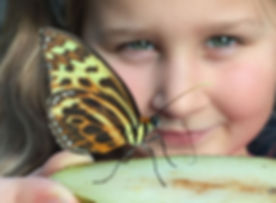 Butterfly Farm to visit with kids while stay at Daisy Lodge in Stratford upon Avon