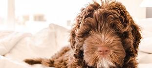 adorable-animal-baby-668004.jpg