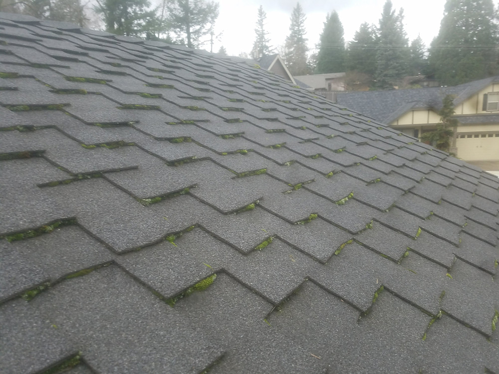 Roof Moss Removal In Seattle