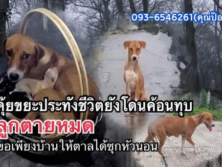 แม่หมาสุดอาภัพลูกก็ตายหมด ยังถูกคนใจร้ายเอาค้อนทุบขา