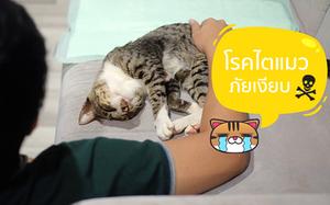 โรคไตแมว แมวเป็นโรคไต