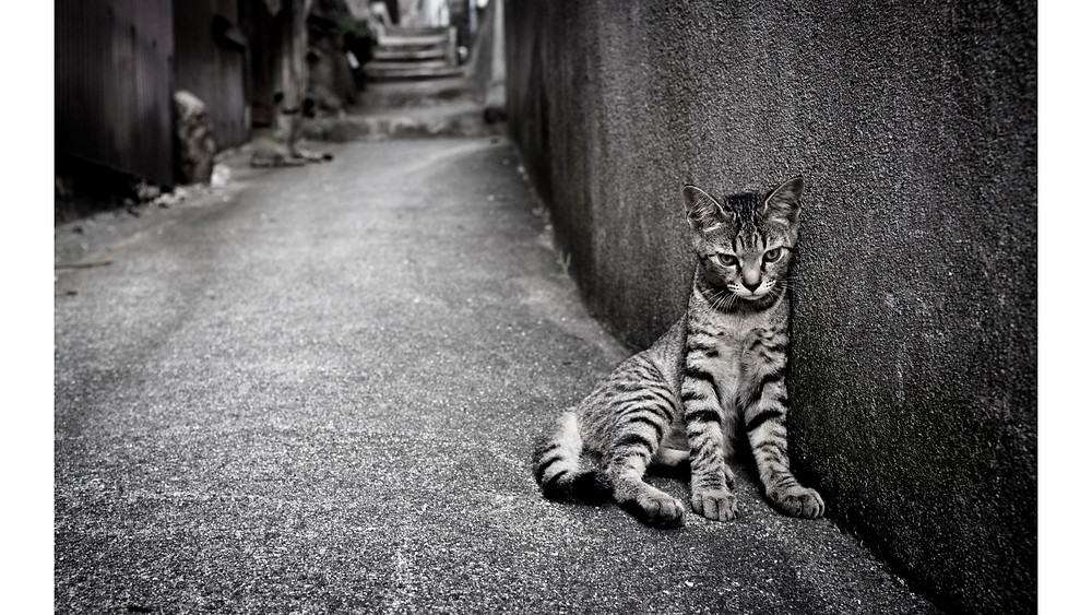 Cattttt.jpg