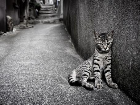 คิดก่อนทิ้ง(แมว)