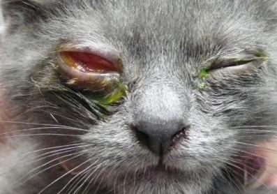 pr00129_OkapiSciences_Feline_Herpes_Virus_Okapi_200x130.jpg