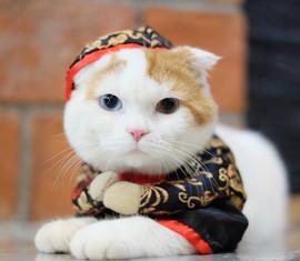 cat.003.jpeg