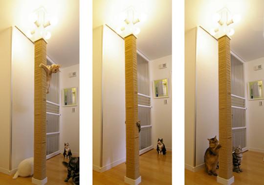 catshouse8.jpg