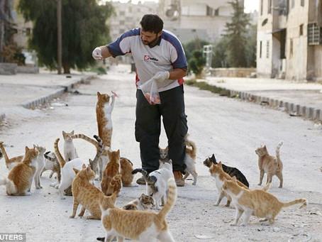 หนุ่มซีเรียไม่ยอมอพยพจากเมือง เพื่อดูแลแมวถูกทิ้งนับร้อย