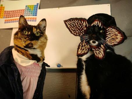 ไอเดียสำหรับแต่งตัวน้องหมาน้องแมวในวัน Halloween