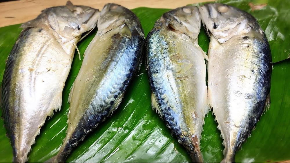 ปลาทูเข่ง