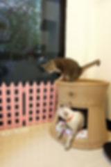 โรงแรมแมว, รับฝากแมว