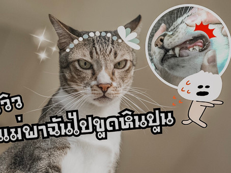 รีวิว พาแมวไปขูดหินปูน