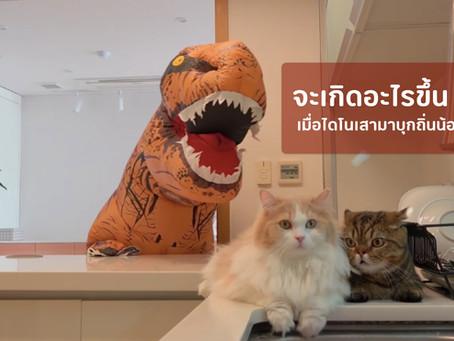 มาชมความน่ารักน่าเอ็นดูของน้องแมว เมื่อต้องเจอกับไดโนเสากันค่ะ
