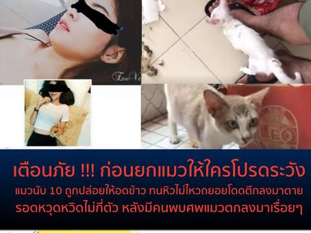 หดหู่สาวรับแมวไป10กว่าตัว สุดท้ายปล่อยทิ้งให้อดตาย ไม่มาดูแล