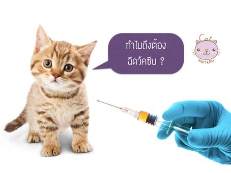 การฉีดวัคซีนแมว