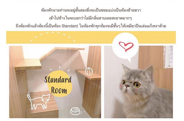 รับฝากแมว รีวิวโรงแรมแมว