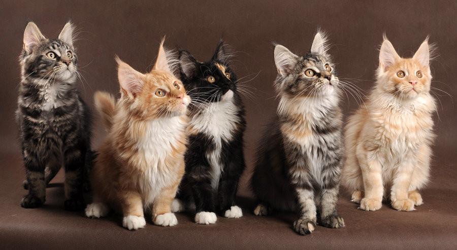 chatons.2.jpg