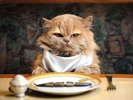 สิ่งที่ทาสแมวควรรู้ก่อนเลือกซื้ออาหารแมว