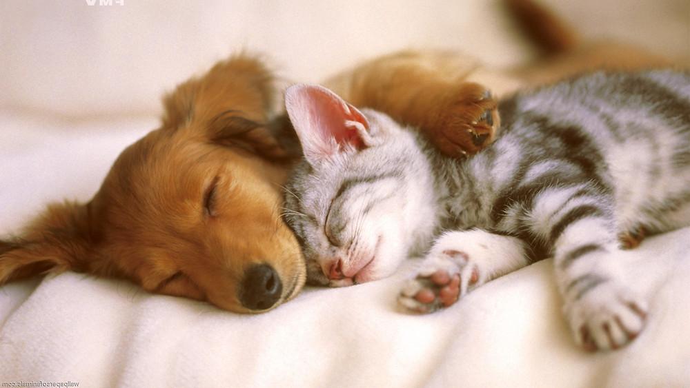 tumblr_static_catdog.jpg