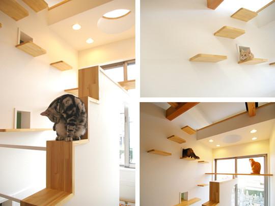 catshouse1.jpg