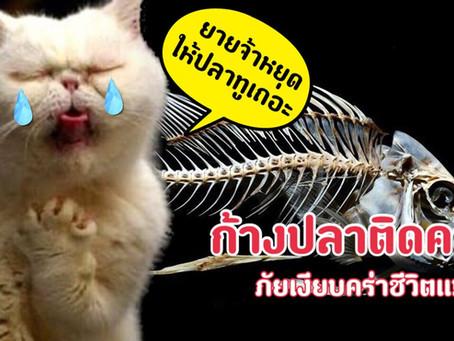 ก้างปลาติดคอ ภัยร้ายคร่าชีวิตแมว