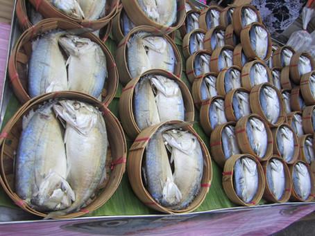 ปลาทูนึ่งอาหารโปรด(เลี่ยง)ของน้องแมว