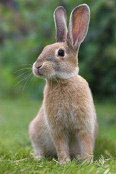 rabbit-pic.jpg