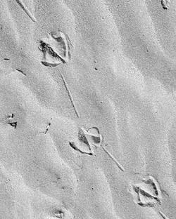 #footprints