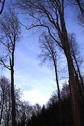 02 - Die Waldfrau im Lauf der Jahreszeiten...
