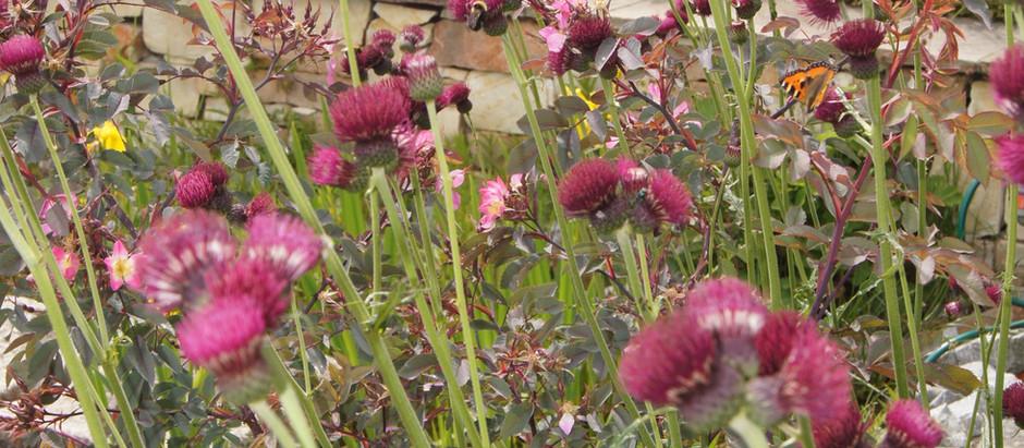 Blütenflor im Sommer - Gartenpflege