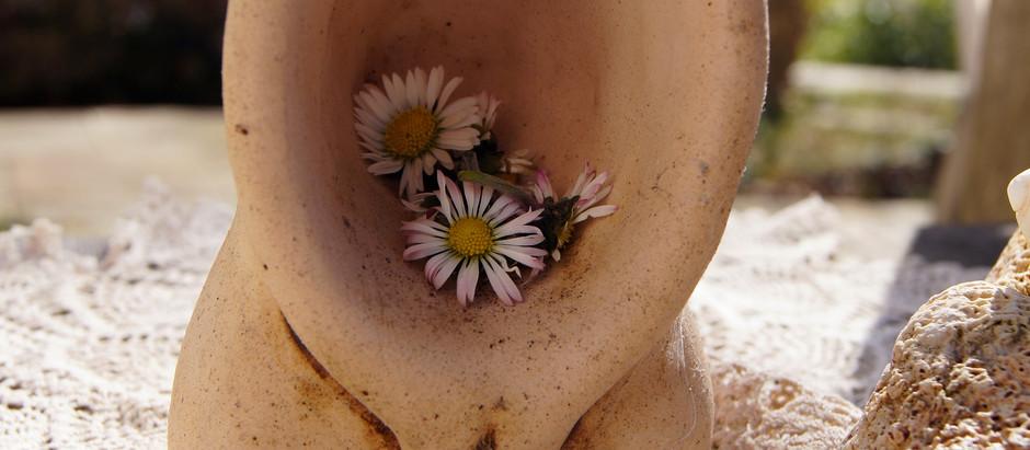 Das Gänseblümchen - Eine Pflanze der Frau Holle