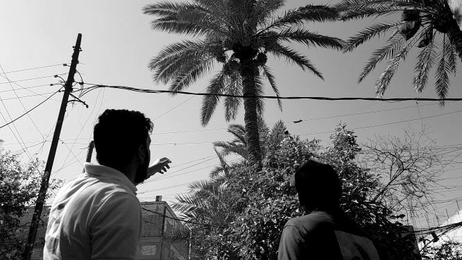 """Hoffnungsvoller Blick auf alte Lebensspender: """"Nakhla -Die Arabische Welt für Palmen-"""". Bild: Sinan Salaheddin Mahmoud"""