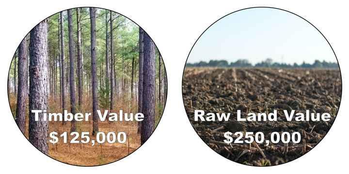 Timber tax basis establishment