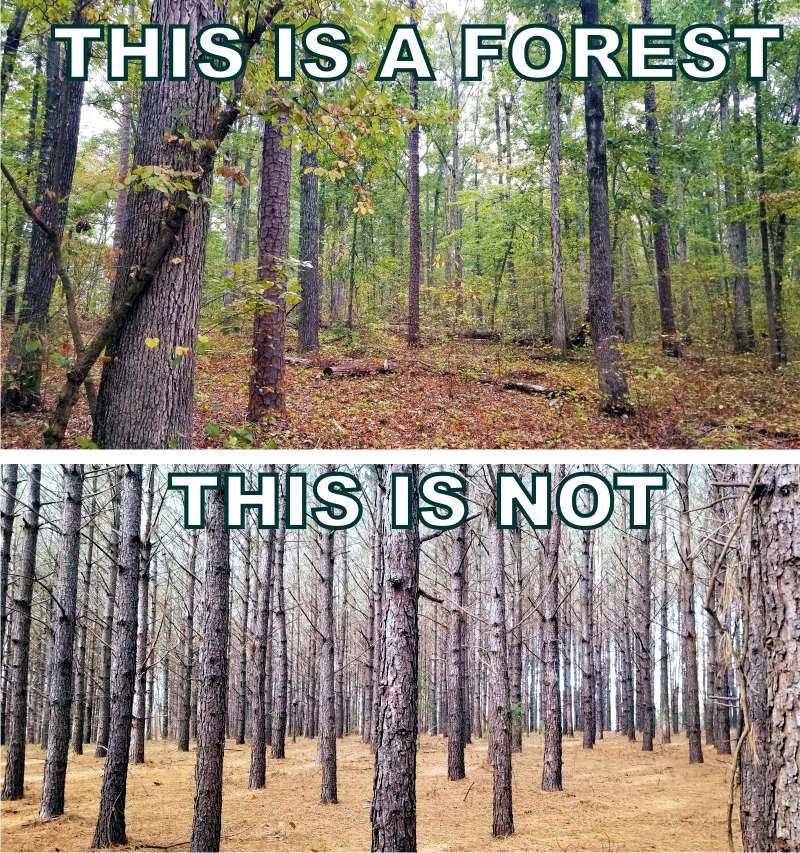 Native forest vs plantation forest