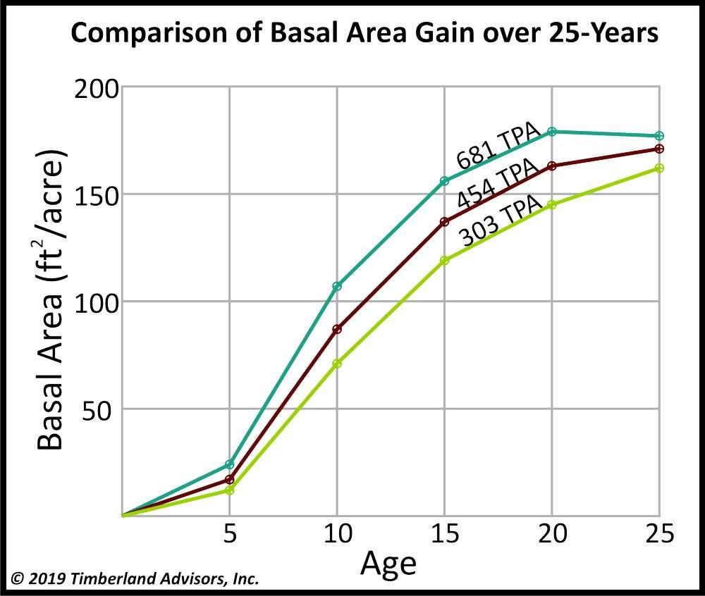 Loblolly Pine Basal Area Per Acre Comparison
