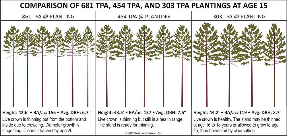 Loblolly planting density comparison