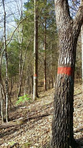 painted property boundary line