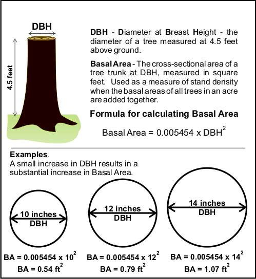 Basal area explanation