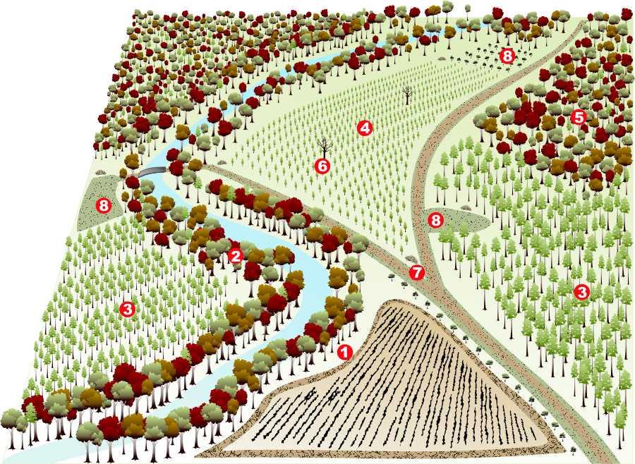 Diverse wildlife habitat