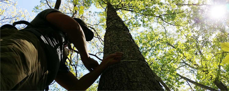 TreeMeasure-lowres.jpg