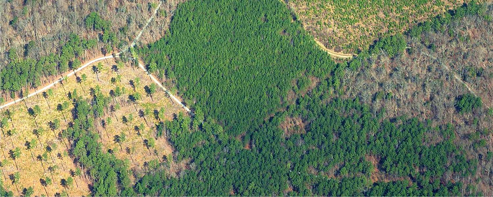 TimberlandAerial-lowres.jpg