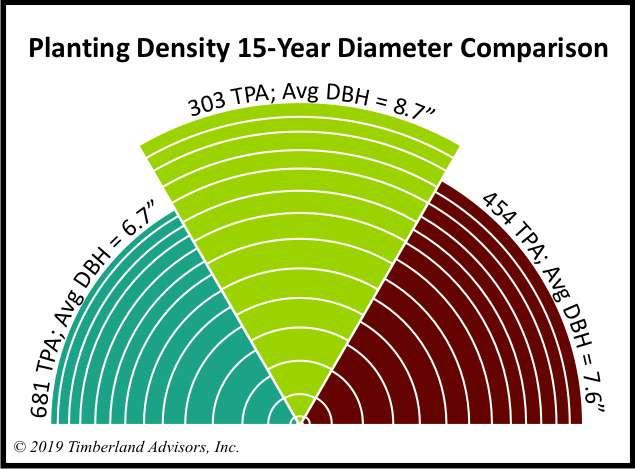 Loblolly pine planting density DBH comparison