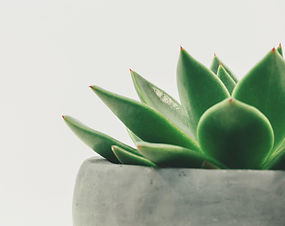 Enjoy%20a%20potted%20succulent%20in%20mi