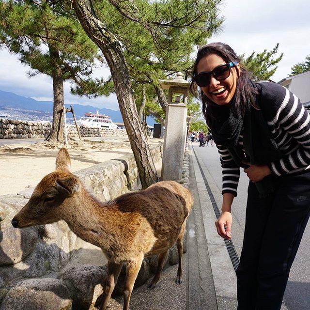 deer of miyajima island