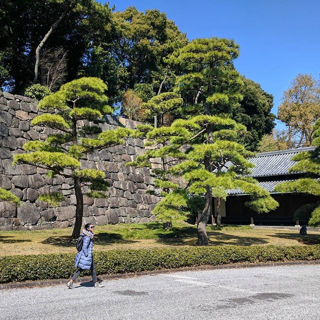Visiting the Imperial Palace in Tokyo.