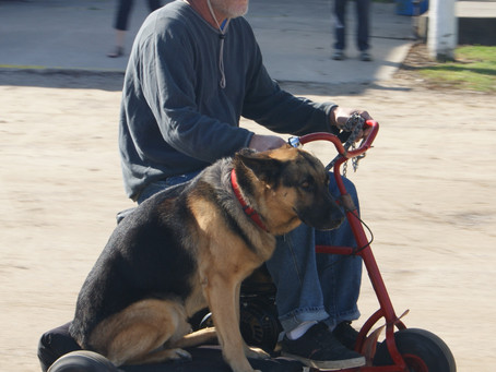 Man and Man's Best Friend Ride Doodle Bug Scooters Together
