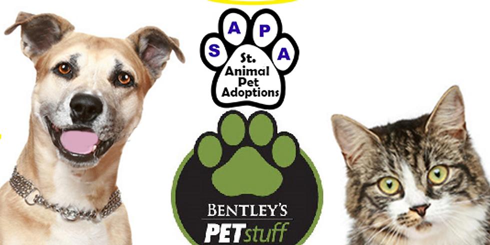 Paint Your Pet! at Bentley's in Kirkwood