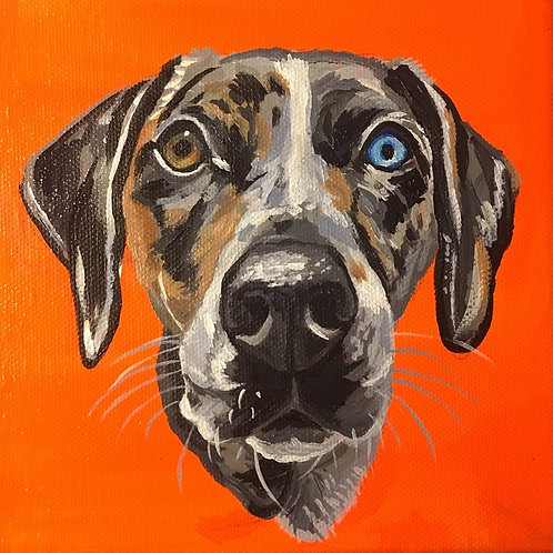 "Custom Pet Painting: 6""x6"""